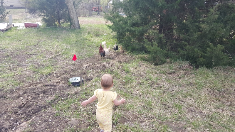 Tirzah Mae chases the chickens