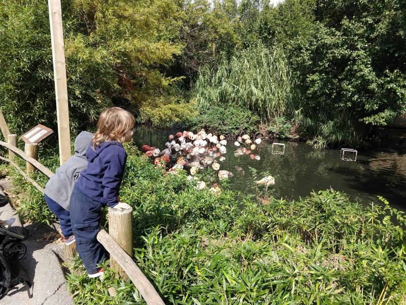 Looking at the flamingos