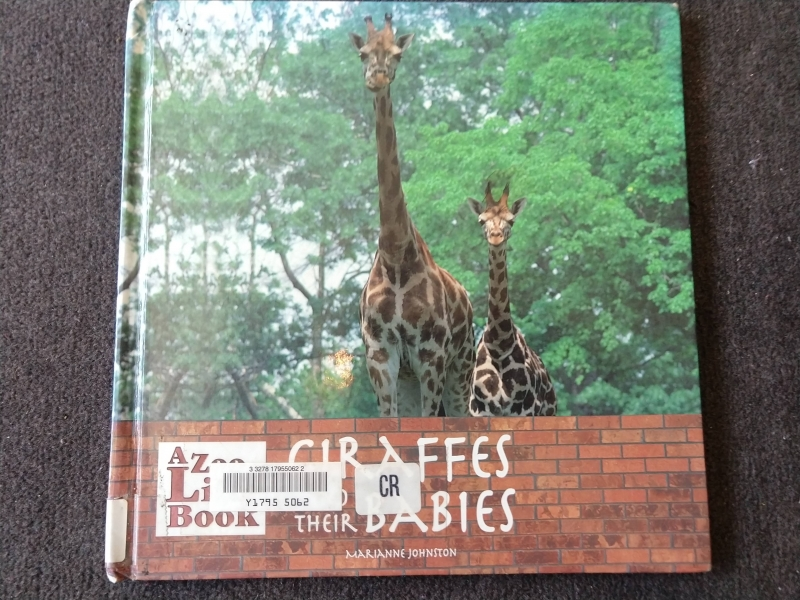 """Giraffes and Their Babies"""