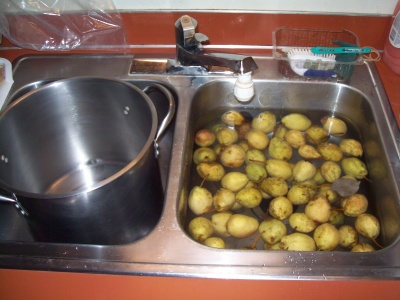 Pears in sink of water